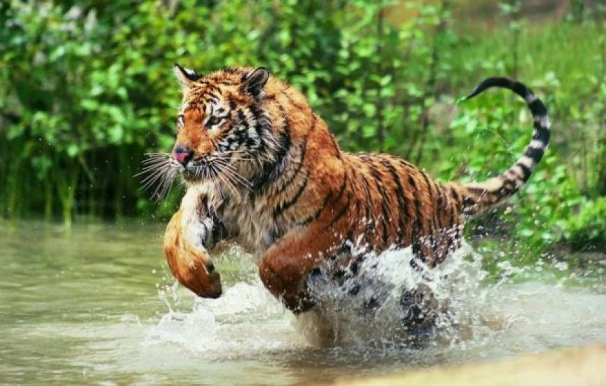 Day 4: Mangrove Expedition with Royal Bengal Tiger